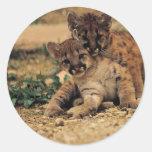 Cute Baby Tigers Classic Round Sticker
