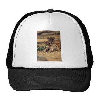 Cute Baby Tigers Trucker Hat