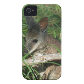 Cute Baby Wallaby iPhone 4 Cases