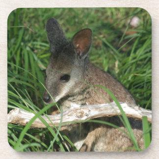 Cute Baby Wallaby Beverage Coaster