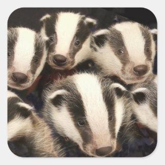Cute Badger Cubs Square Sticker