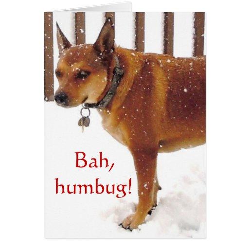 Cute Bah, Humbug! Grumpy Red Cattle Dog Diva Greeting Card