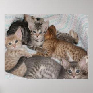 CUTE BASKET OF KITTENS POSTER
