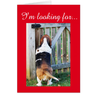 Cute Basset Hound Searching for a Valentine Card