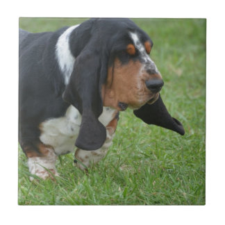 Cute Basset Hound Small Square Tile