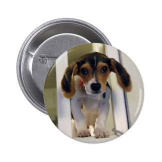 cute beagle 2 inch round button