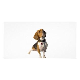 Cute Beagle Dog Card