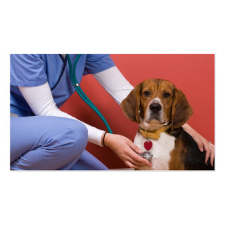 Cute Beagle Dog Getting a Veterinary Checkup Business Card Template