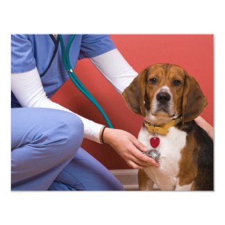 Cute Beagle Dog Getting a Veterinary Checkup Card