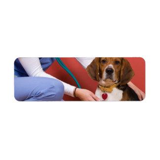 Cute Beagle Dog Getting a Veterinary Checkup Label