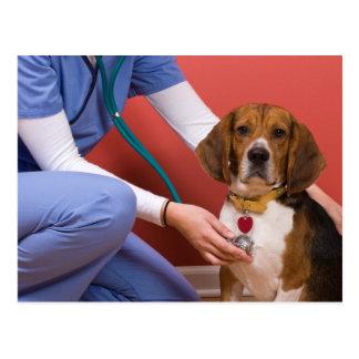 Cute Beagle Dog Getting a Veterinary Checkup Postcard