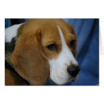 Cute Beagle  Greeting Cards
