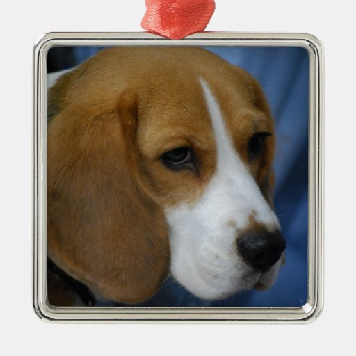 Cute Beagle Ornament