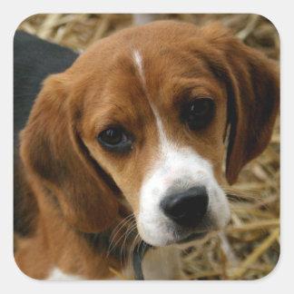 Cute Beagle Puppy Dog Greeting Stickers