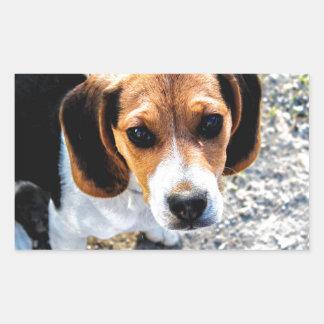 Cute Beagle Rectangular Sticker