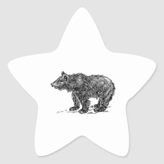 Cute Bear Cub Star Sticker