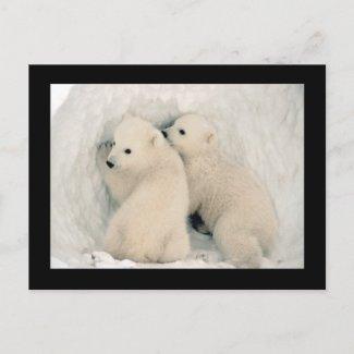Cute Bear Cubs Postcard postcard