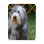 Cute Bearded Collie Rectangle Magnet