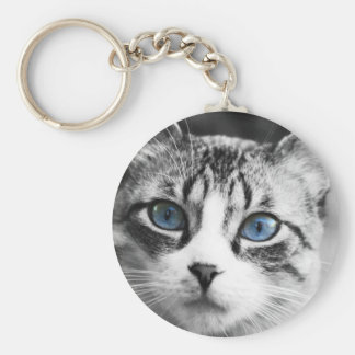 Cute beautiful cat with blue eyes portrait key chains