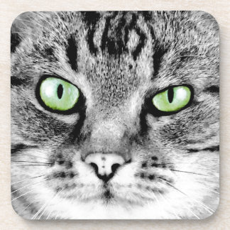 Cute beautiful cat with green eyes portrait drink coaster