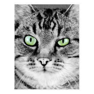 Cute beautiful cat with green eyes portrait postcard