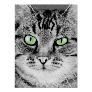 Cute beautiful cat with green eyes portrait poster