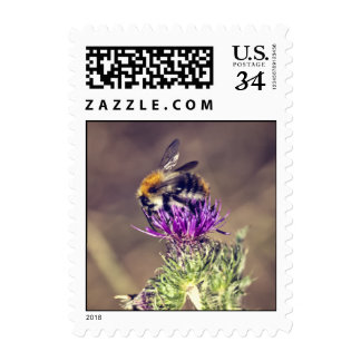 Cute bee on a thistle postage stamp