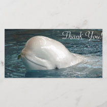 Cute Beluga whale Sticks Face Out of Pool Thank You Card