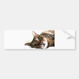 Cute Bengal Cat in Bed Picture Bumper Sticker