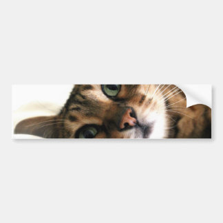 Cute Bengal Cat in Bed Picture Bumper Stickers