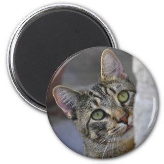 Cute Bengal Striped Cat Sad Kittty Magnet
