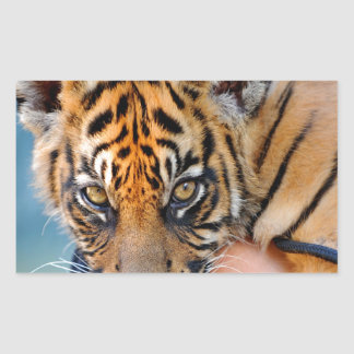 Cute Bengal Tiger Cub Rectangular Sticker