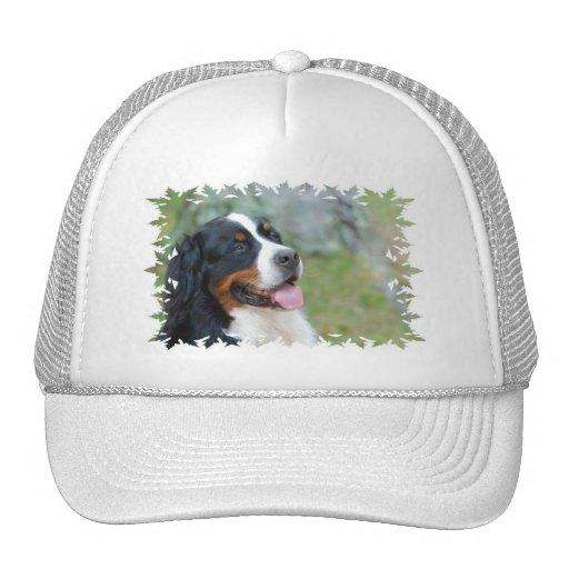 Cute Bernese Baseball Hat