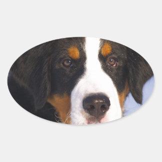 Cute Bernese mountain dog Oval Sticker