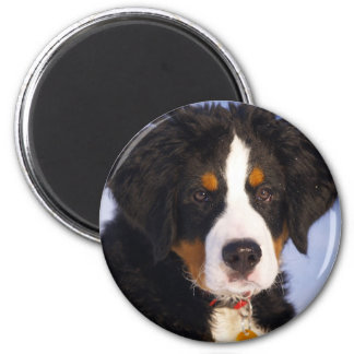 Cute Bernese Mountain Dog Puppy Picture 2 Inch Round Magnet