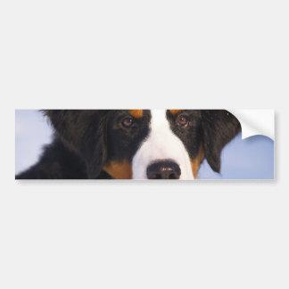Cute Bernese Mountain Dog Puppy Picture Bumper Stickers