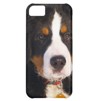 Cute Bernese Mountain Dog Puppy Picture Case For iPhone 5C