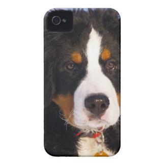 Cute Bernese Mountain Dog Puppy Picture Case-Mate iPhone 4 Case