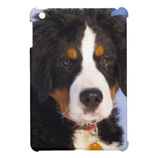 Cute Bernese Mountain Dog Puppy Picture iPad Mini Cases
