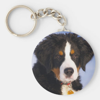 Cute Bernese Mountain Dog Puppy Picture Keychain