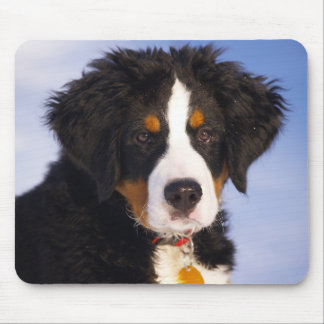 Cute Bernese Mountain Dog Puppy Picture Mouse Pad