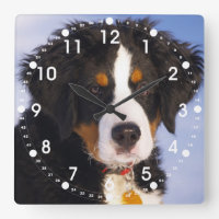 Cute Bernese Mountain Dog Puppy Picture Square Wall Clock