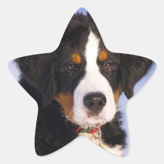 Cute Bernese Mountain Dog Puppy Picture Star Sticker