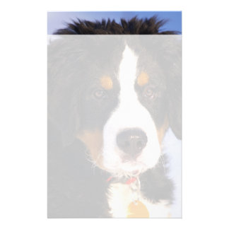 Cute Bernese Mountain Dog Puppy Picture Stationery