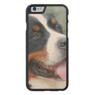 Cute Bernese Mountain Dog Carved® Maple iPhone 6 Case