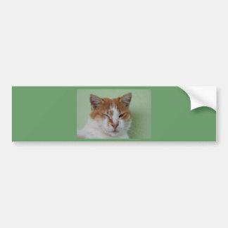 Cute Bi Color Cat Winking Bumper Sticker