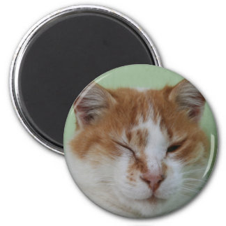 Cute Bi Color Cat Winking Magnets