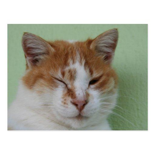 Cute Bi Color Cat Winking Postcard