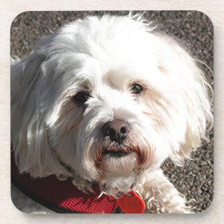 Cute bichon frise dog drink coaster