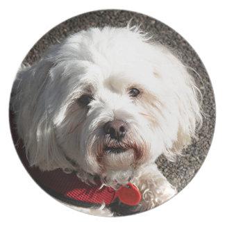 Cute bichon frise dog melamine plate